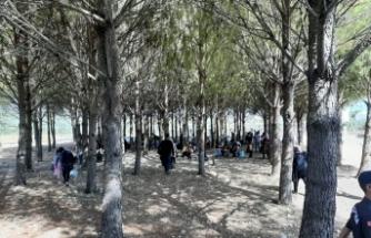 Muğla'da 75 düzensiz göçmen yakalandı