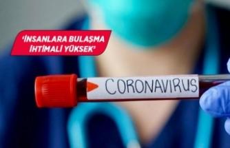 Yeni corona virüsü tehlikesi!