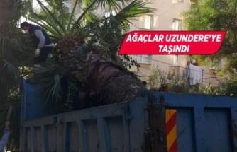 Karabağlar'da hizmetler sürerken yeşil de korunuyor!