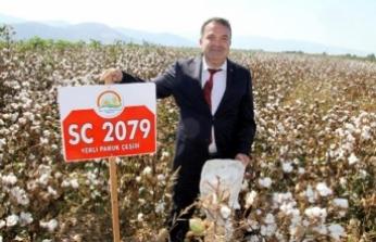 Yerli ve milli pamuk türü SC 2079 tanıtıldı