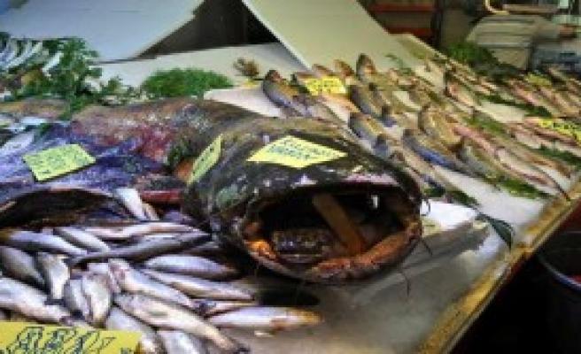 130 Kiloluk Yayın Balığı İlgi Odağı Oldu