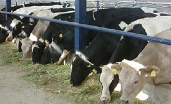 Hayvancılık Destekleri 20 Kat Arttı