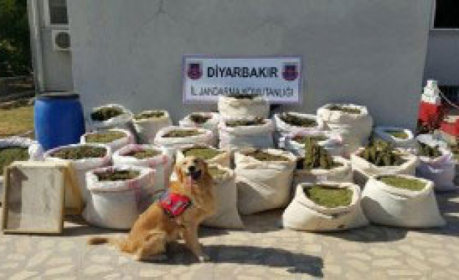 Diyarbakır'da 466 Kilo Esrar Ele Geçirildi