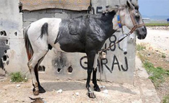 Atları Diri Diri Yaktılar