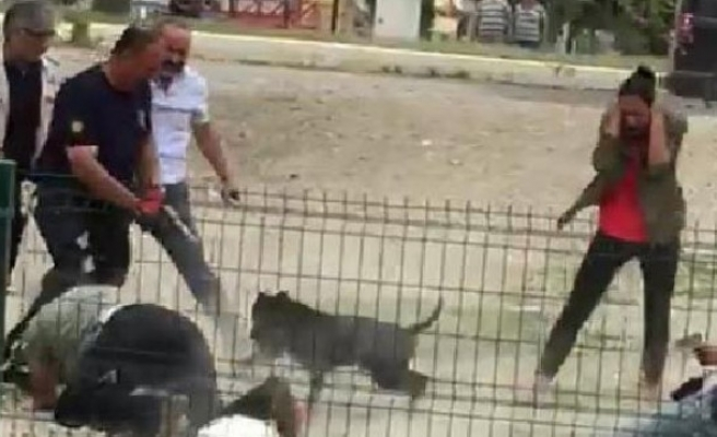 İzmir'de pitbull dehşeti! Polisi görünce...