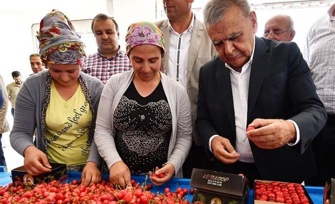 Türkiye'nin en önemli kiraz merkezi: Kocaoğlu üreticilerle buluştu