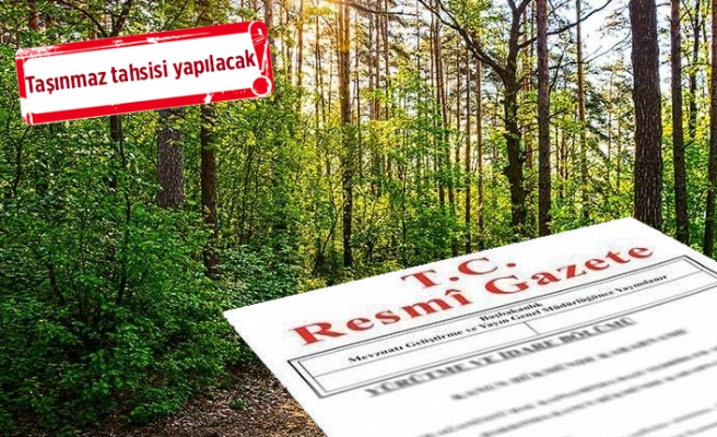 İzmir'de orman kararı! Sınır dışına çıkarıldı