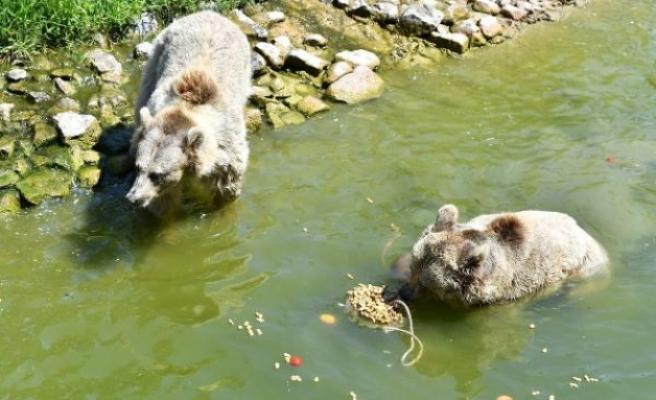 Doğal Yaşam Parkı'ndaki hayvanlara buzlu yiyecek