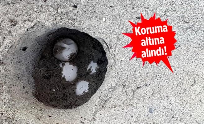 İzmir'de bir ilk: Heyecan yarattı