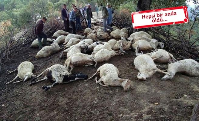 Feci olay: 39 hayvan telef oldu