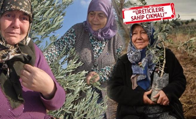 Yırca'da hukuk mücadelesi sonlandı: Santral yok!