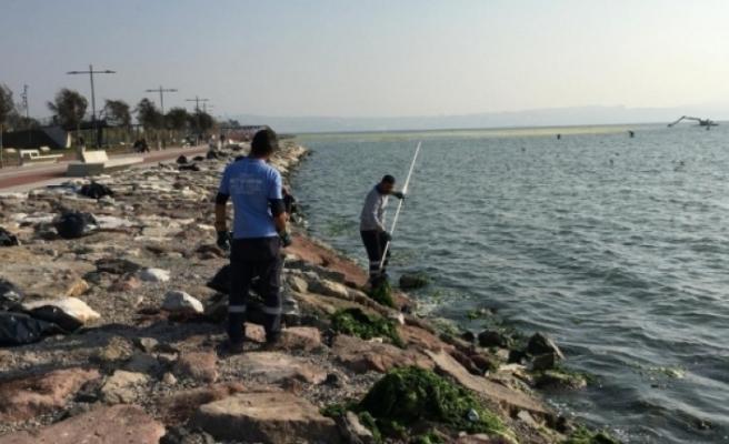 İzmir Körfezi rahatladı