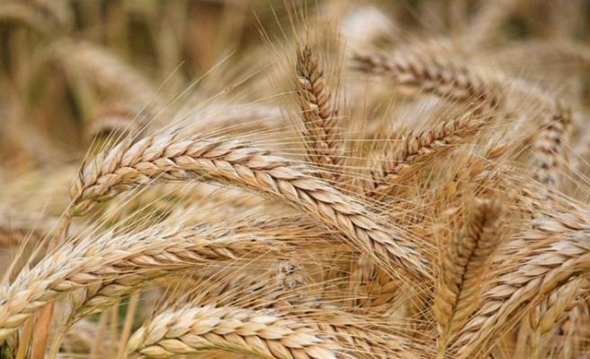 Bitkisel üretim istatistikleri açıklandı