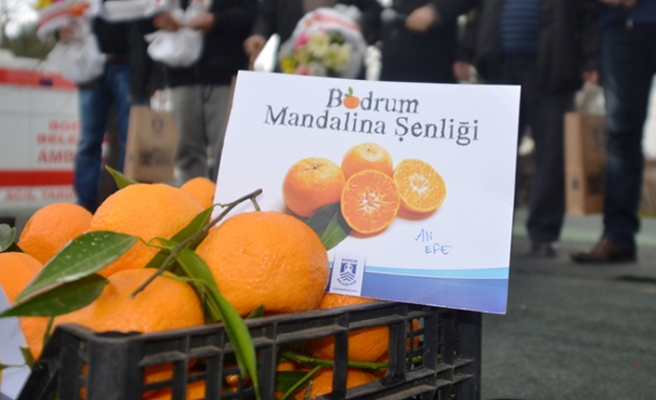Bodrum'da Mandalina Festivali
