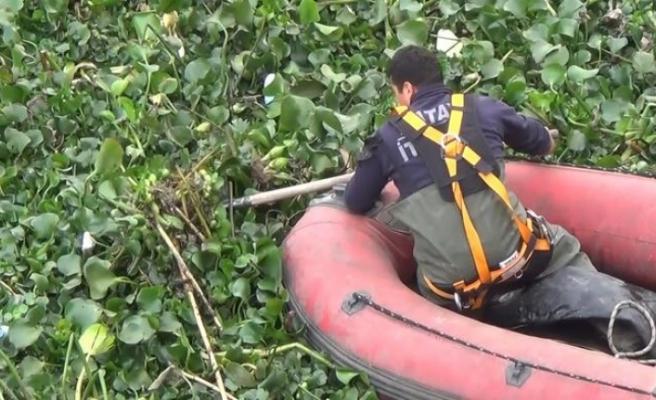 Film değil gerçek: Nehri su canavarları kapladı