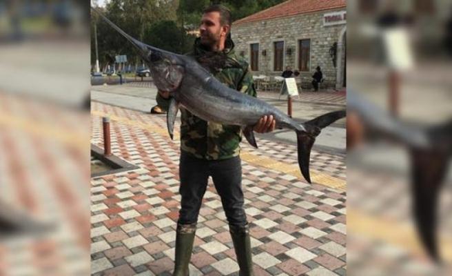Foça'da dev kılıç balığı yakalandı