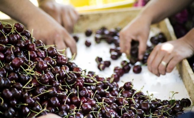 Sebze ve Meyve ihracatında tarihi rekor