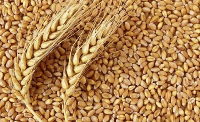 Makarnalık buğdayda çiftçiye alım garantisi
