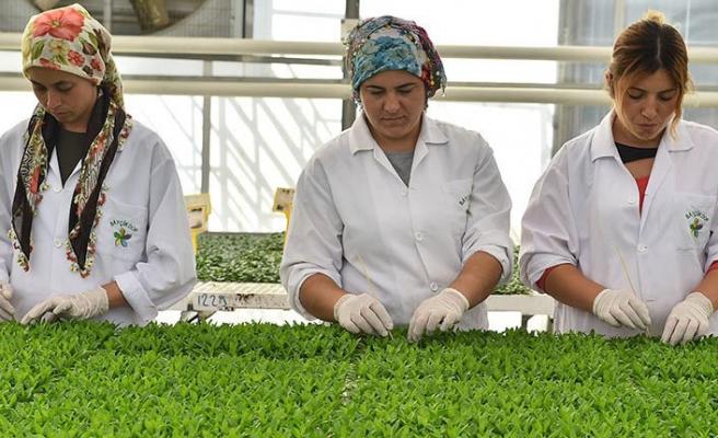 Bayındır'ı dünya pazarına taşıyacak proje