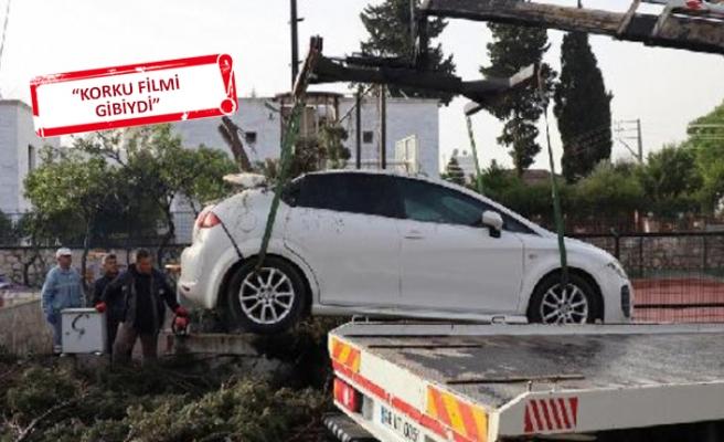 Bodrum'da fırtına kabusu: Ağaçlar devrildi, güneşlikler uçtu