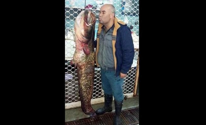 Salihli'de yakalandı: 42 kilo!