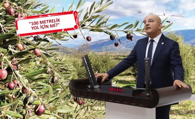 '1000 zeytin ağacı' TBMM gündeminde