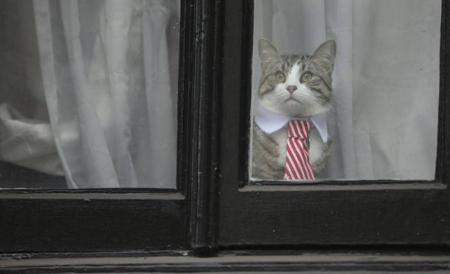 Assange tutuklandı, dünya kedi James'i konuştu