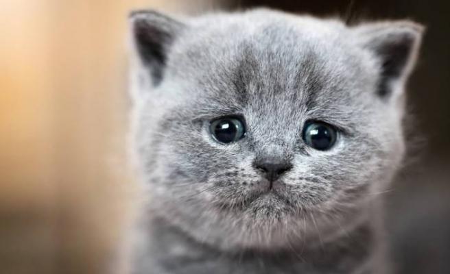 Milyonlarca kediyi öldürecekler!