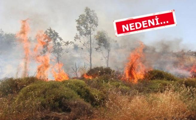 İzmir'de yangın! Yerleşim yerlerini tehdit ediyor