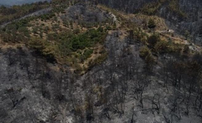 Bakan'dan yangını paylaşımı: Ormanın küllerini göstereceğiz öğrencilere