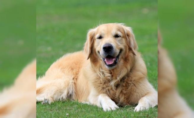 Köpek sahiplenmek kalp hastalıkları riskini azaltıyor