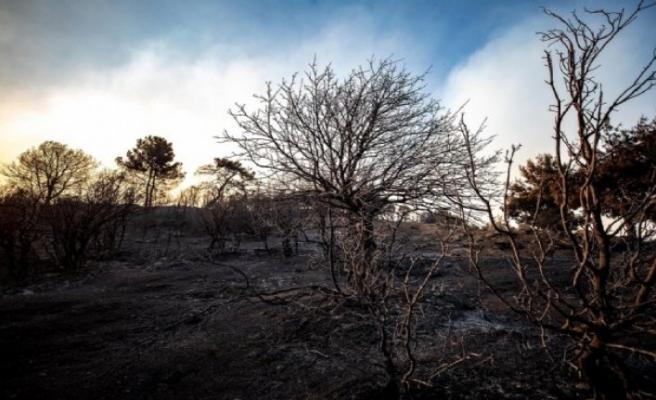 Yangının bilançosu belli oldu: Karşıyaka kadar alan yandı!