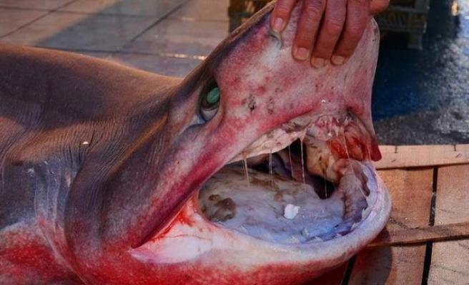 Kayıp turistin eli, köpekbalığının karnında bulundu!
