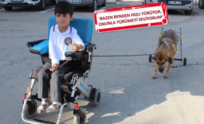 Yürüteçli köpeğe bedensel engelli Mustafa, en iyi dost oldu