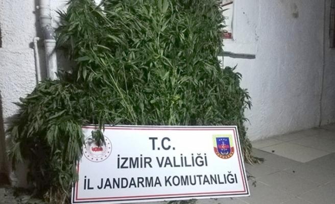 İzmir'de hazine arazisinde uyuşturucu bulundu