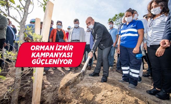 Büyükşehir Belediyesi 1293 muhtar için 1293 fidan dikti