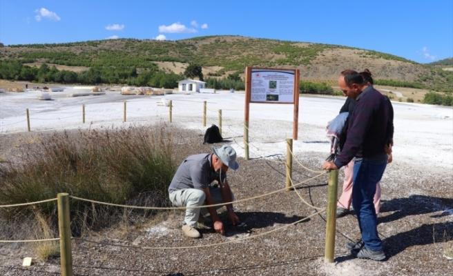 Salda Gölü'ne özgü bitki türü koruma altına alındı