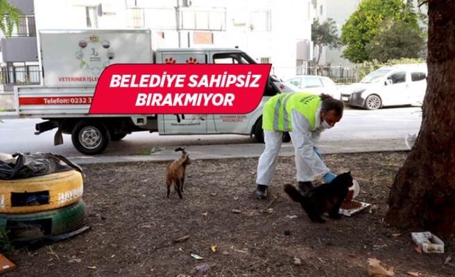 Bayraklı'da sokak hayvanları yalnız değil