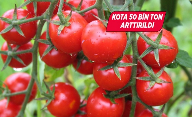 Rusya Türk domatesinin kotasını 250 bin tona çıkardı