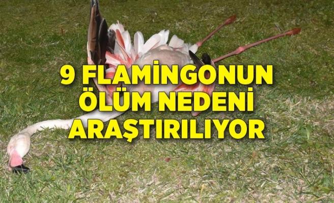 9 flamingonun ölüm nedeni araştırılıyor