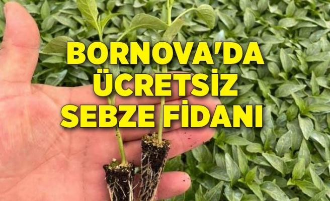 Bornova'da ücretsiz sebze fidanı