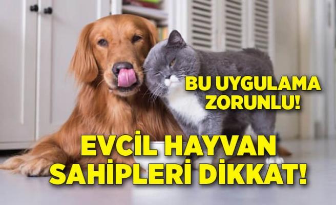 Evcil hayvan sahipleri dikkat! Pasaport ve mikroçip zorunluluğu getirildi
