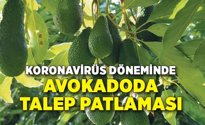 Koronavirüs döneminde avokadoda talep patlaması