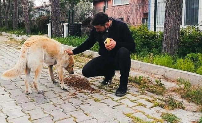 AK Partili gençler sokak hayvanlarını unutmadı