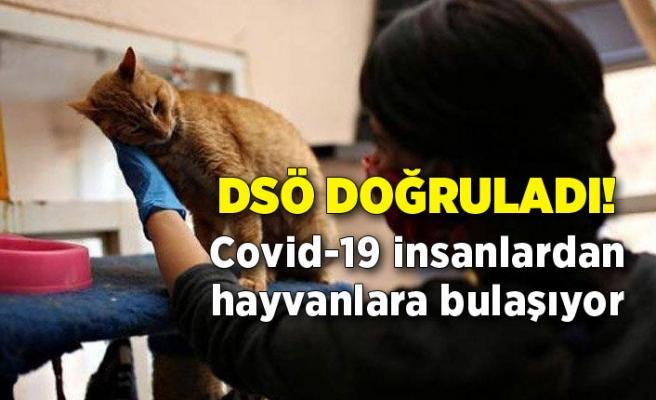 DSÖ doğruladı! Covid-19 insanlardan hayvanlara bulaşıyor