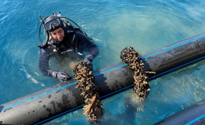 Hibe desteğiyle midye üretim tesisi kurdu
