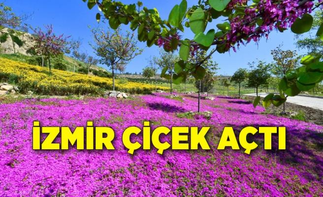 İzmir çiçek açtı