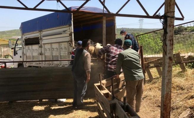 Koyun hırsızları 147 saatlik kamera kaydı izlenerek yakalandı