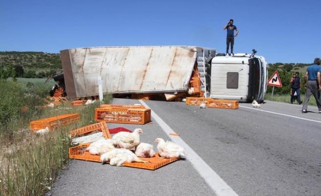 Manisa'da TIR devrildi, yüzlerce tavuk öldü