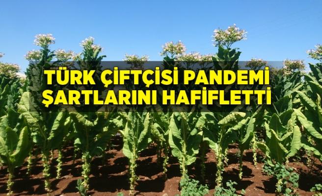 Türk çiftçisi pandemi şartlarını hafifletti
